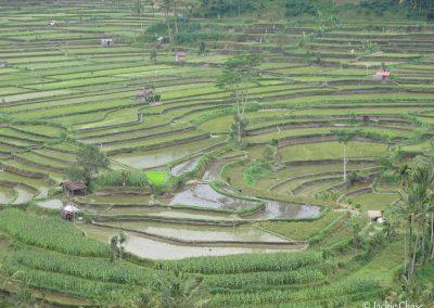 Bali | Chase-2510
