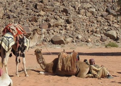 Camels and their owners resting in the Wadi Rum.-c