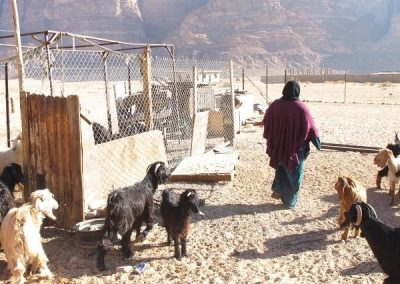 Goats are a prized possession in the desert as they bring goats milk, cheese and hair for warm tents and rugs.-C