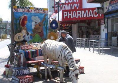 Painted burro corner 2