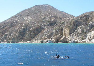 Shark fin and sea lion tale